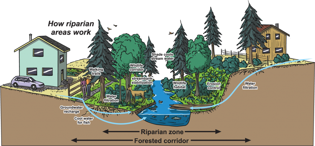 image_riparian_areas